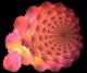 N-Dimensional Rose