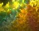 Neon Bristle